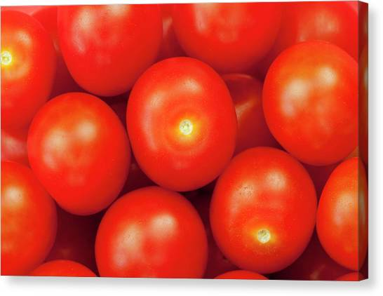 Cherry Tomatoes Canvas Print by Andrew Dernie