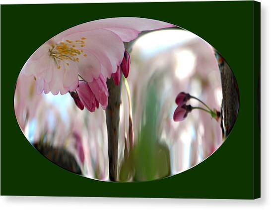 Cherry Tree Blossom Series 803 Canvas Print
