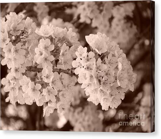 Cherry Tree Blossom Canvas Print