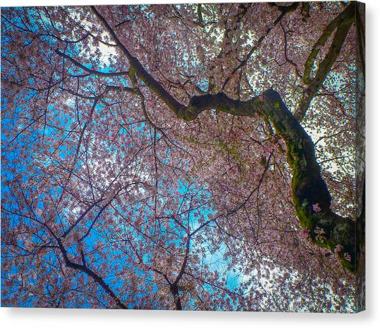 University Of Washington Canvas Print - Cherry Tree by Roger Mullenhour