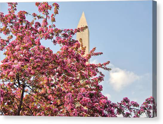 Cherry Trees And Washington Monument One Canvas Print