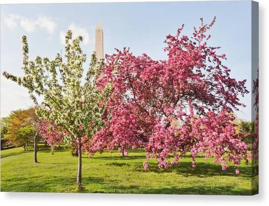 Cherry Trees And Washington Monument Three Canvas Print