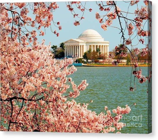 Cherry Trees At The Jefferson Canvas Print