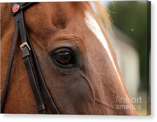 Chestnut Horse Eye Canvas Print