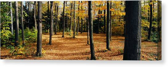 Fallen Leaf Canvas Print - Chestnut Ridge Park Orchard Park Ny Usa by Panoramic Images