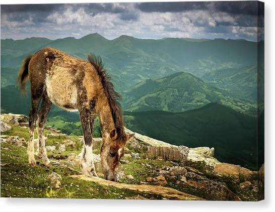 Cheval De La Rhune Le Pottok Canvas Print by Oeildeprimate Photographe