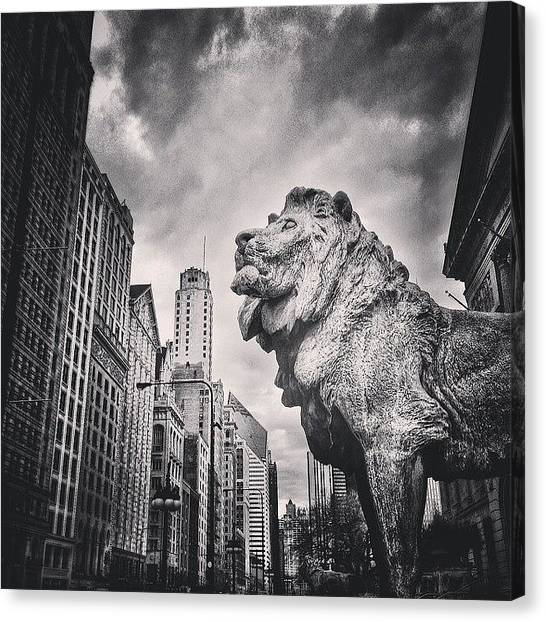 White Canvas Print - Art Institute Of Chicago Lion Picture by Paul Velgos