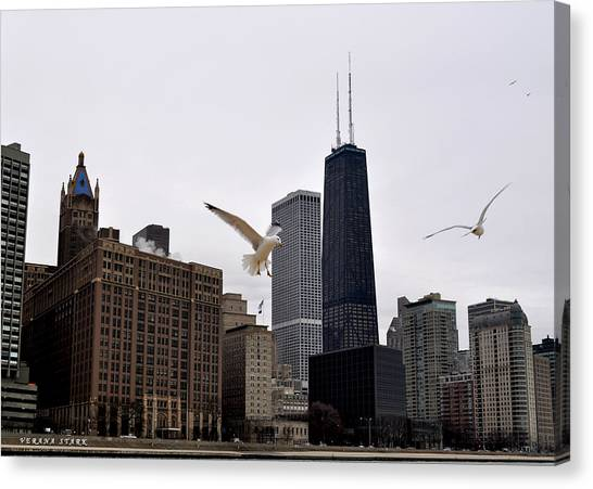 Chicago Birds 2 Canvas Print