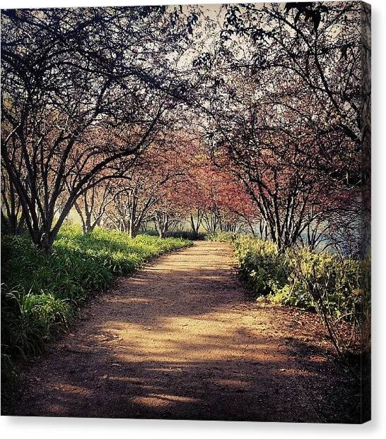 Sears Tower Canvas Print - Chicago Botanic Gardens by Jill Tuinier