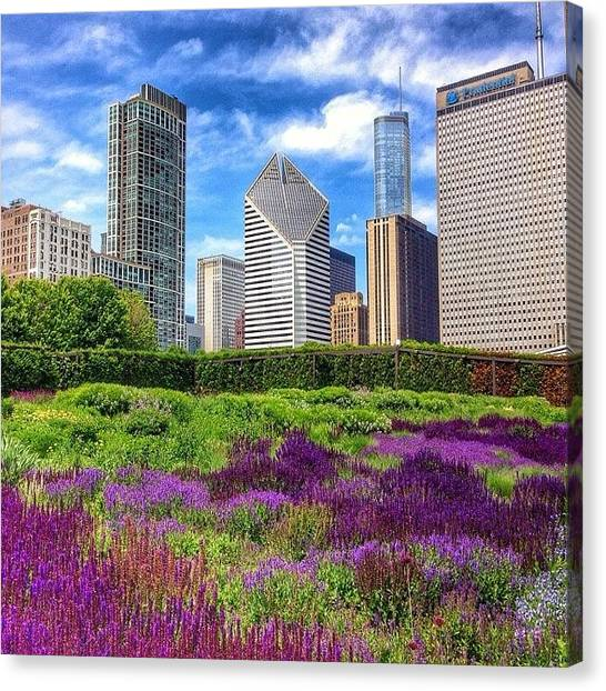 Colorful Canvas Print - Chicago Skyline At Lurie Garden by Paul Velgos