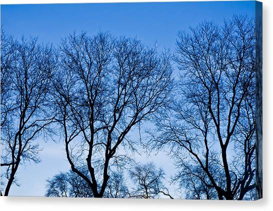 Mba Canvas Print - Chicago - Trees In Blue Hues by MBA Photography
