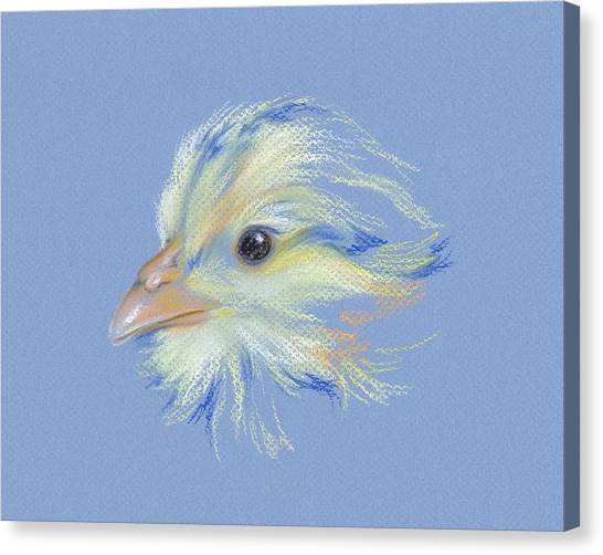 Canvas Print featuring the pastel Chick - Plymouth Barred Rock by MM Anderson