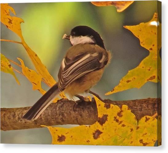 Chickadee 105 Canvas Print by Patsy Pratt
