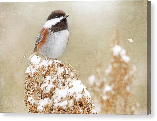 Chickadee And Falling Snow Canvas Print