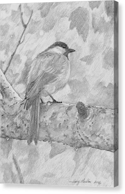 Chickadee In The Rain Canvas Print