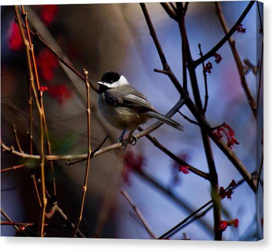 Canvas Print featuring the photograph Chickadee by Robert L Jackson