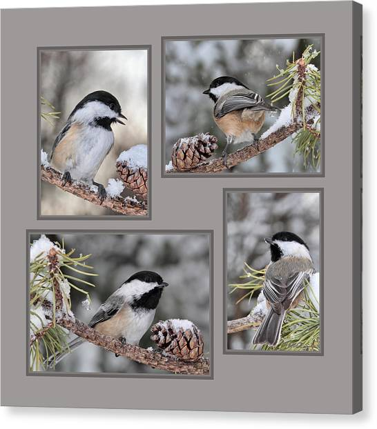 Chickadees In Winter Canvas Print