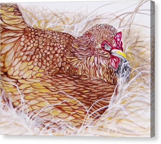 Chicken Laying Egg Canvas Print
