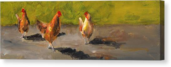 Chicken Farms Canvas Print - Chicken Shadows by Cari Humphry