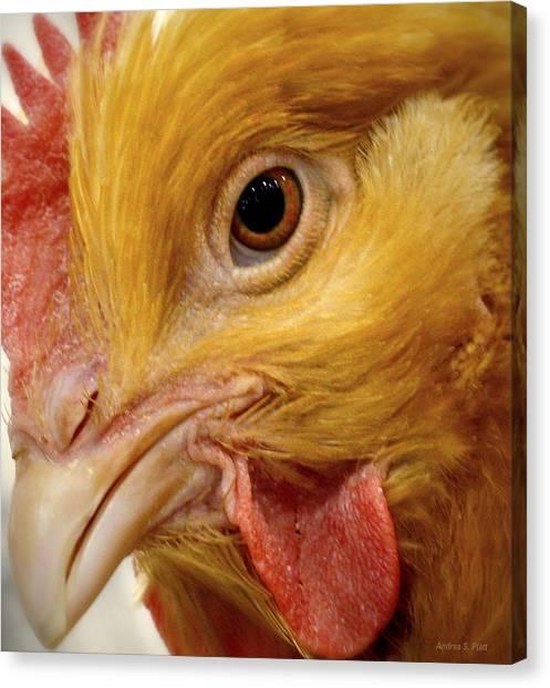 Chicken Vision Canvas Print