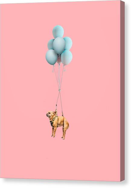 Chihuahua Dog Floating With Balloons Canvas Print by Ian Ross Pettigrew