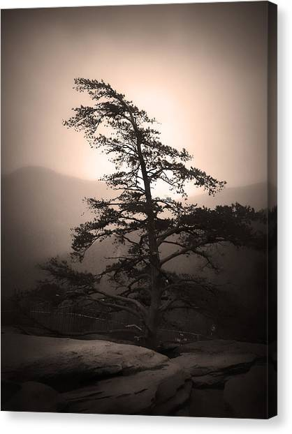 Canvas Print featuring the photograph Chimney Rock Lone Tree In Sepia by Kelly Hazel