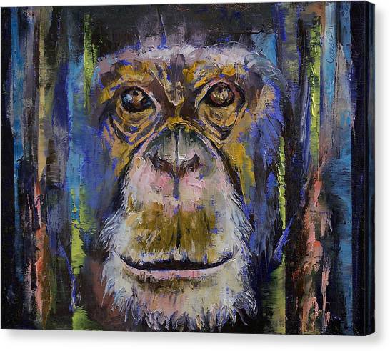 Chimpanzees Canvas Print - Chimpanzee by Michael Creese
