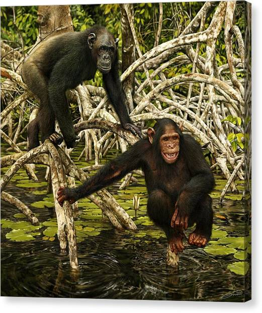 Chimpanzees In Mangrove Canvas Print by Owen Bell