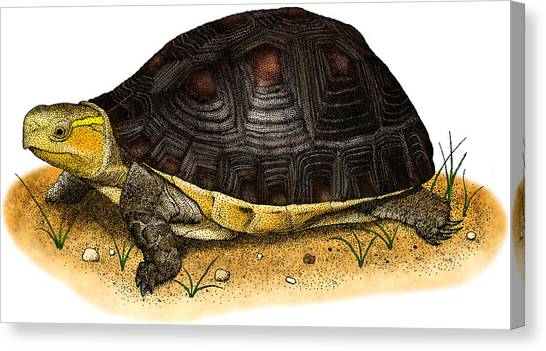 Box Turtles Canvas Print - Chinese Box Turtle by Roger Hall
