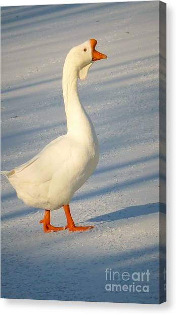Chinese Goose Winter Canvas Print
