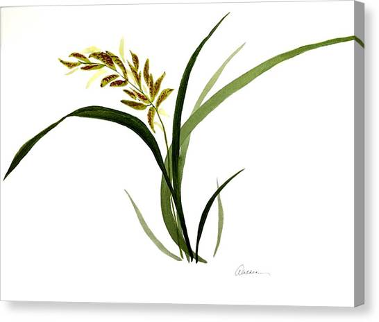 Chinese Wild Orchid #4 Canvas Print
