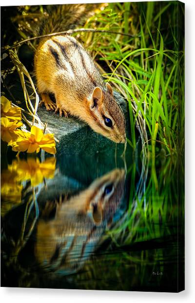 Loft Canvas Print - Chipmunk Reflection by Bob Orsillo