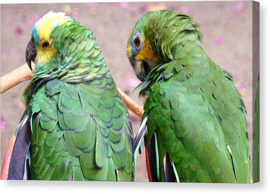 Chit And Chat 2 Canvas Print by Van Ness