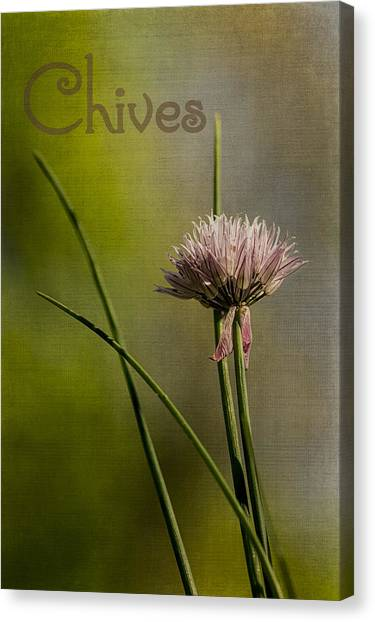 Chives Canvas Print by Wayne Meyer