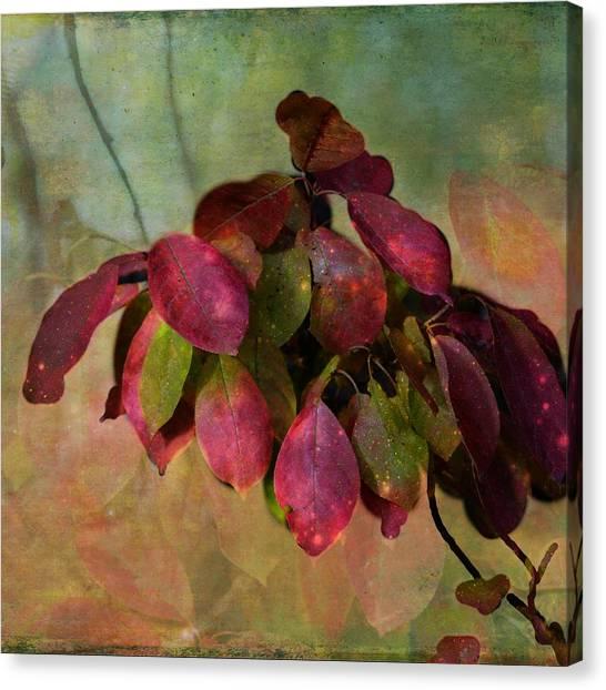 Chokecherry Leaves Canvas Print
