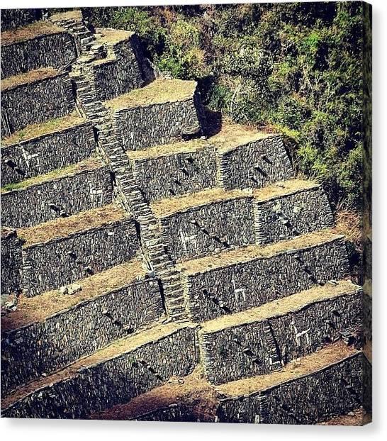 Llamas Canvas Print - #choquequirao #incas #peru #cuzco by Jurga Sereikaite