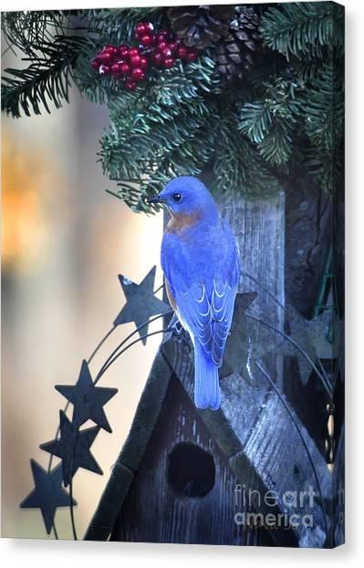 Christmas Bluebird Canvas Print