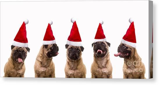 Pugs Canvas Print - Christmas Caroling Dogs by Edward Fielding