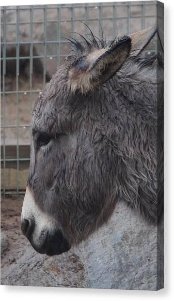 Christmas Donkey Canvas Print