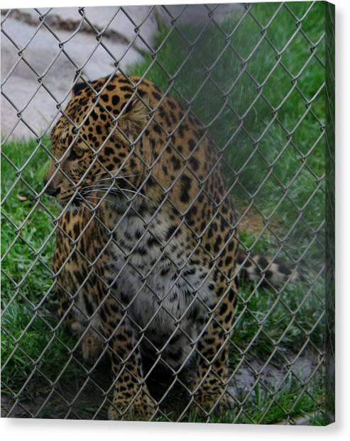 Christmas Leopard I Canvas Print