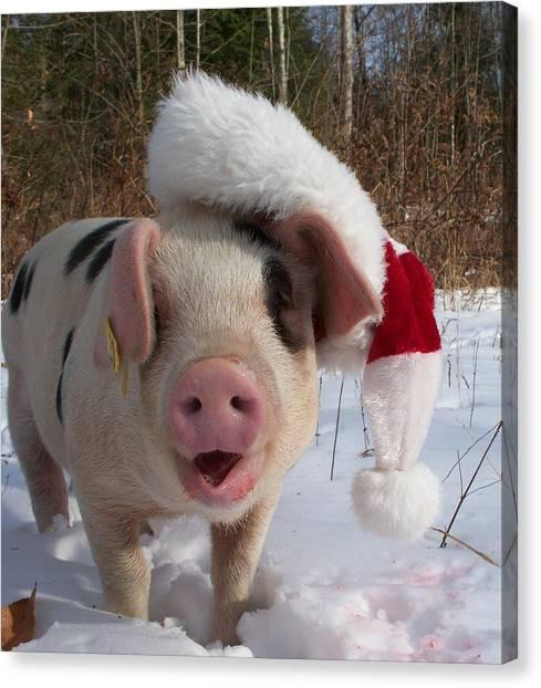 Farm Raised Pigs Canvas Print - Christmas Pig by Samantha Howell