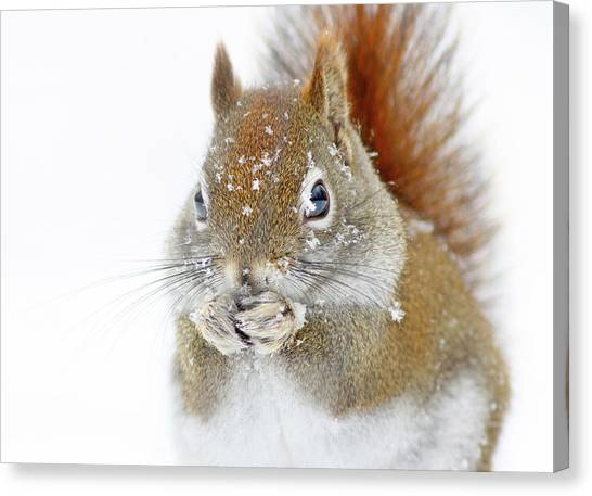 Squirrels Canvas Print - Christmas Squirrel by Mircea Costina