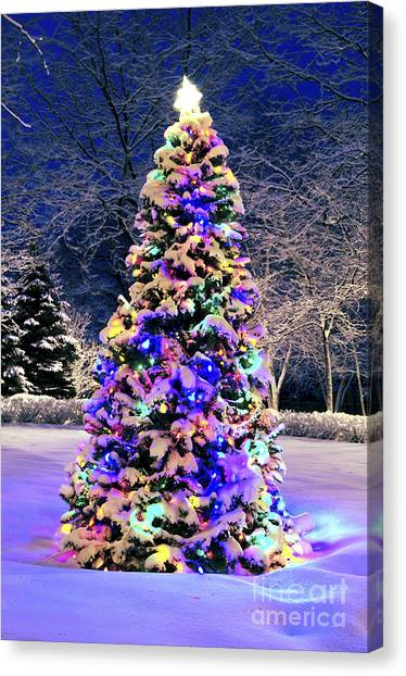 Fir Trees Canvas Print - Christmas Tree In Snow by Elena Elisseeva