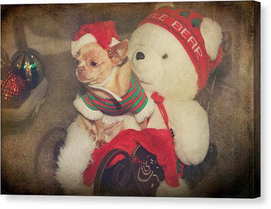 Chihuahuas Canvas Print - Christmas Zoe by Laurie Search