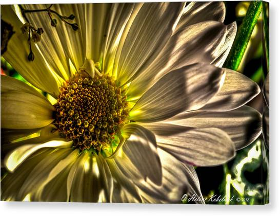 Chrysanthemum Canvas Print by Helene Kobelnyk