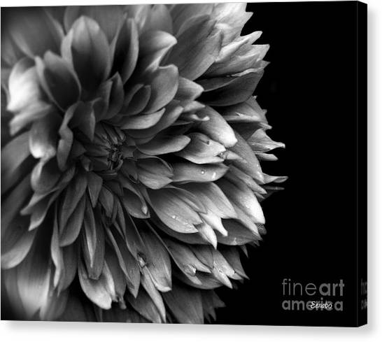 Chrysanthemum In Black And White Canvas Print