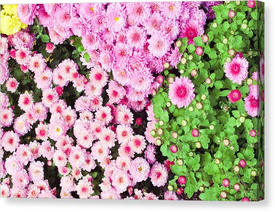 Selection Canvas Print - Chrysanthemums by Tom Gowanlock