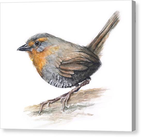 South American Canvas Print - Chucao Tapaculo Watercolor by Olga Shvartsur