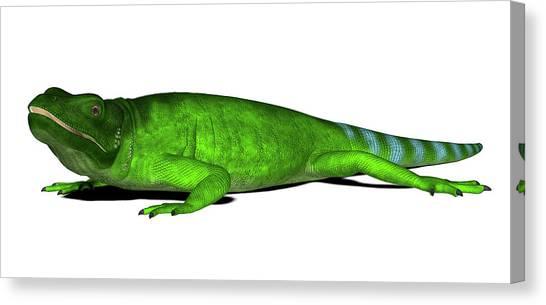 Chuckwalla Lizard Canvas Print by Friedrich Saurer