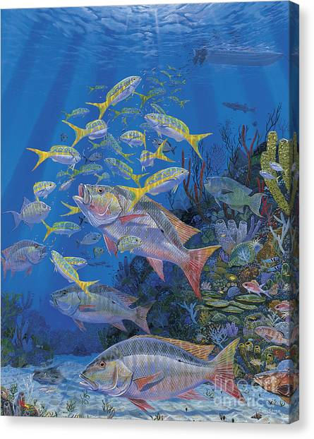 Bahamas Canvas Print - Chum Line Re0013 by Carey Chen